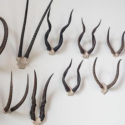 Horns & Lyons family